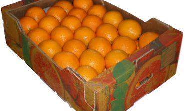 ΚΗΦΙΣΙΑ : Οι κλέφτες με τα φρούτα – Μια σπείρα εξαπατούσε ηλικιωμένους