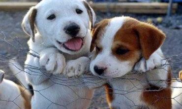 Δημιουργούνται καταφύγια αδέσποτων ζώων σε Ωραιόκαστρο, Χαλκηδόνα και Νάουσα