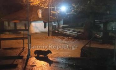 Σοκ στη Φθιώτιδα: Σκότωσε το αλεπουδάκι που φρόντιζαν συγχωριανοί του