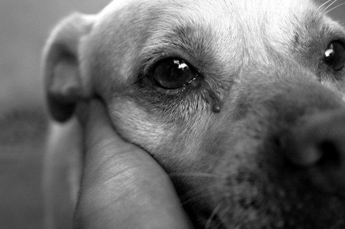 """Με αφορμή το περιστατικό του Κρυονερίου. ΔΗΜΙΟΥΡΓΙΑ ΞΑΝΑ: """"Σκυλίσια"""" ζωή ή Ανθρώπινη φροντίδα;"""