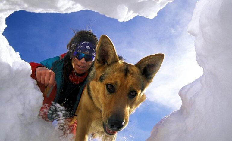 Ελβετία: Οι σκύλοι έσωσαν ζευγάρι που είχε θαφτεί κάτω από χιονοστιβάδα