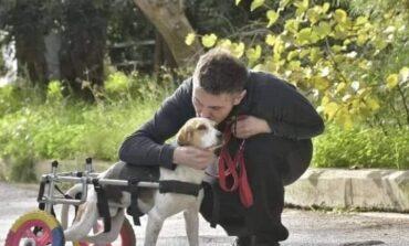 Δείτε το αναπηρικό αμαξίδιο της σκυλίτσας του Χατζηγιάννη και της Μακρυπούλια