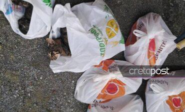 Αποτροπιασμός σε χωριό του Ηρακλείου με μαζικές θανατώσεις γατιών