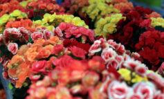 67η Ανθοκομική Έκθεση Κηφισιάς: Εναρξη αιτήσεων ανθοπαραγωγών – φυτωριούχων