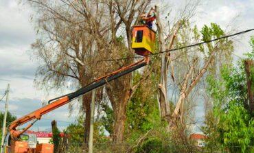 Κλάδεμα δέντρων: Και σε ιδιωτικούς χώρους η ευθύνη του Δήμου