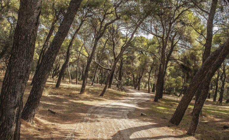 Κηφισιά : Εθελοντική δράση καθαρισμού των δασών μας