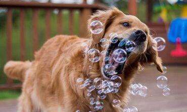Νομοσχέδιο, ρεζίλι των σκυλιώνε! Γράφει ο Θάνος Τζήμερος