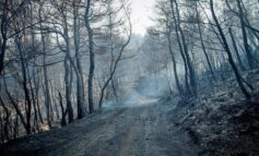 Καμένα δάση: έγκλημα κατά των επόμενων γενεών