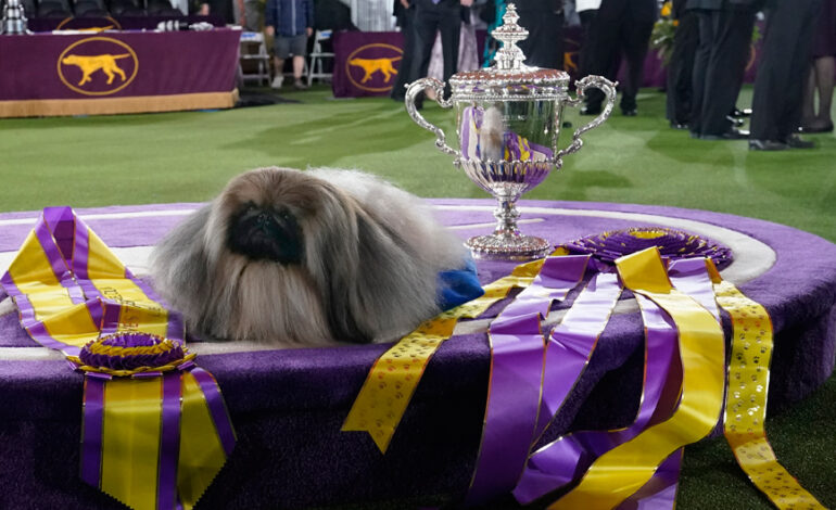Ένα χνουδωτό πεκινουά νικητής στο δημοφιλέστερο σόου σκύλων στις ΗΠΑ – Εικόνες από τον διαγωνισμό