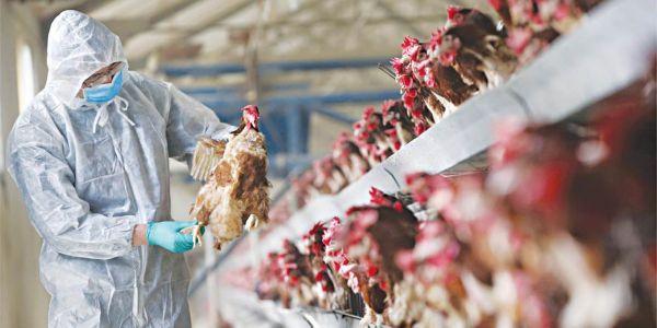 Γρίπη των πτηνών: Πρώτο κρούσμα σπάνιου στελέχους του ιού ανακοίνωσε η Κίνα