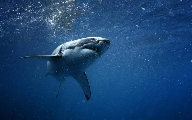 Αυτό είναι το αρχαιότερο θύμα επίθεσης καρχαρία που έχει ανακαλυφθεί