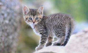 Πάτρα: 23χρονος προφυλακίστηκε για θανάτωση γάτας