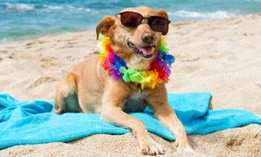 Σκυλιά και παραλίες: Τι λέει η νομοθεσία – Όλα όσα πρέπει να γνωρίζετε 🐶🐾🐕