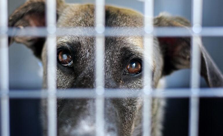 Αφγανιστάν: Το Λονδίνο έτοιμο να απομακρύνει σκύλους και γάτες από την Καμπούλ
