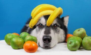 Πώς θα φτιάξετε την τέλεια δροσιστική γρανίτα για το σκύλο σας σύμφωνα με την pet editor