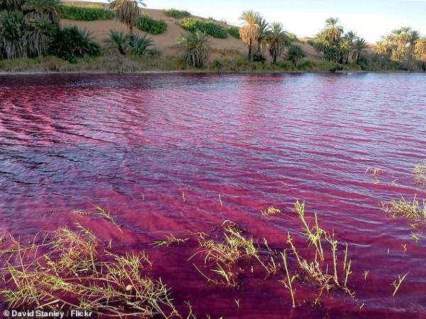 Η Νεκρά Θάλασσα «βάφτηκε» κόκκινη – Τι συνέβη