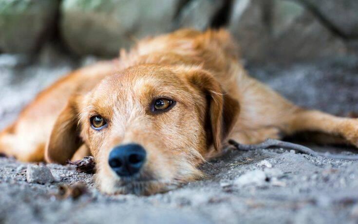 Ρόδος: Στο εδώλιο δύο ηλικιωμένοι που απαγχόνισαν τον σκύλο τους